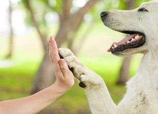 razones para tener perro en casa