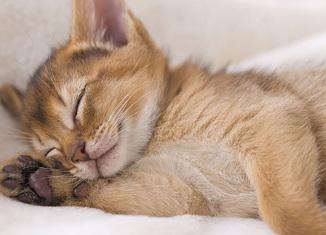 razones por las que los gatos duermen con los amos