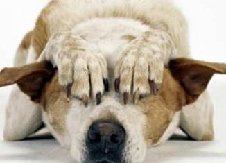 razones para que tus mascotas no reciban ruidos